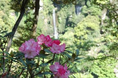 大村花祭(3/20~6/25)