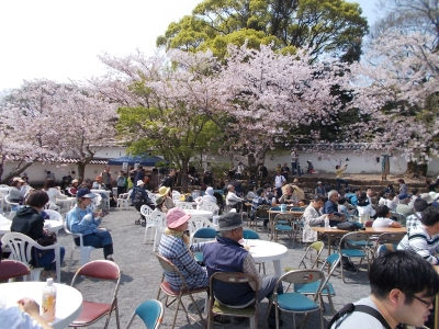 At the Cherry Blossom Festival, you can enjoy some events such as mini live concerts and Omura flower ambassador contest.